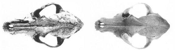 2schaedel-oben-80.jpg
